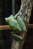 Reptile043.jpg