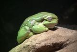 Reptile045.jpg