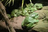 Reptile047.jpg