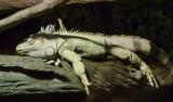 Reptile050.jpg