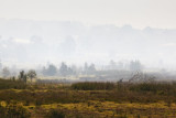 Fire110.jpg