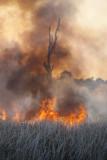 Fire118.jpg