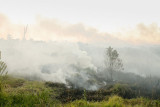 Fire138.jpg