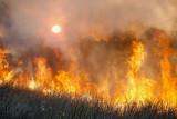 Fire146.jpg