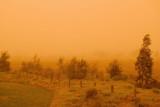 Orange013.jpg