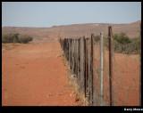 243 Dog Fence.JPG