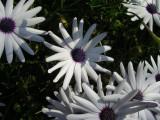 Garden Flowers 3 - Macro