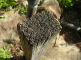 Garden Stake - Macro