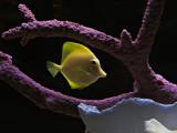 Fish in tank #2