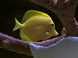Fish in tank #3