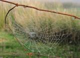 Web on a misty day.