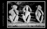 Angolan Monkeys