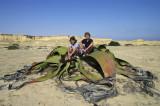 Welwitschia Mirabillis 1