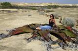Welwitschia Mirabillis 3