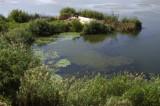 Lake Arco 4