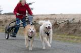 dog_carting