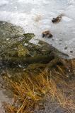 Ice Detail, Mirror Lake