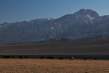 Late Afternoon, Between Big Pine and Independence #2