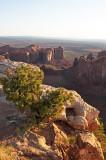 Daybreak on the Mesa