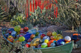 Desert Botanical Garden: The Chihuly Exhibit