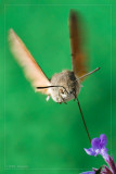 Full Frontal Moth
