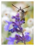 Selective Moth