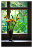 088 - FlowersWithAView