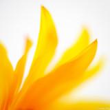 121 - Yellow