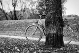 131 - BicycleHidingBehindTree