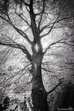 12-067 TreeOfLight
