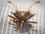 12-073 Bug