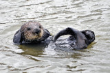 An Afternoon with Otters