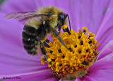 20081012 049 Bee.jpg