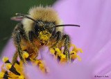 20081015 056 Bee 20mm ET SERIES.jpg