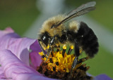 20081015 021 Bee + 36mm ET SERIES.jpg