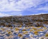Dava Tundra