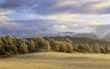 Cairngorm View