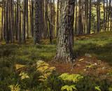 Pine Wood Paradise.