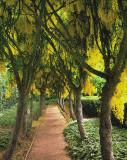 Laburnum Walkway