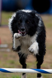 CPE Agility Trial June 20th 2009