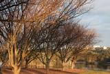 20100725_9071 Winter Trees, Morning Light (Sun 25 Jul)