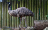 5633 Old Man Emu