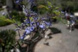 20101103_5930 Variations On Spring (Wed 03 Nov)
