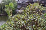 20101106_11837 Rain (Sat 06 Nov)