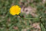 20101107_11851 Sun. Flower. (Sun 07 Nov)
