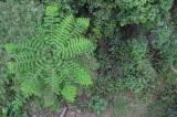 12495 Circular Ferns