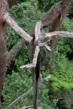 12570 Stringy Bark
