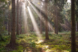 bos in morgenlicht in Hardenberg
