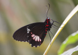 Tropische vlinder gemaakt in een vlindertuin