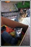 Box of Kittens and Mom